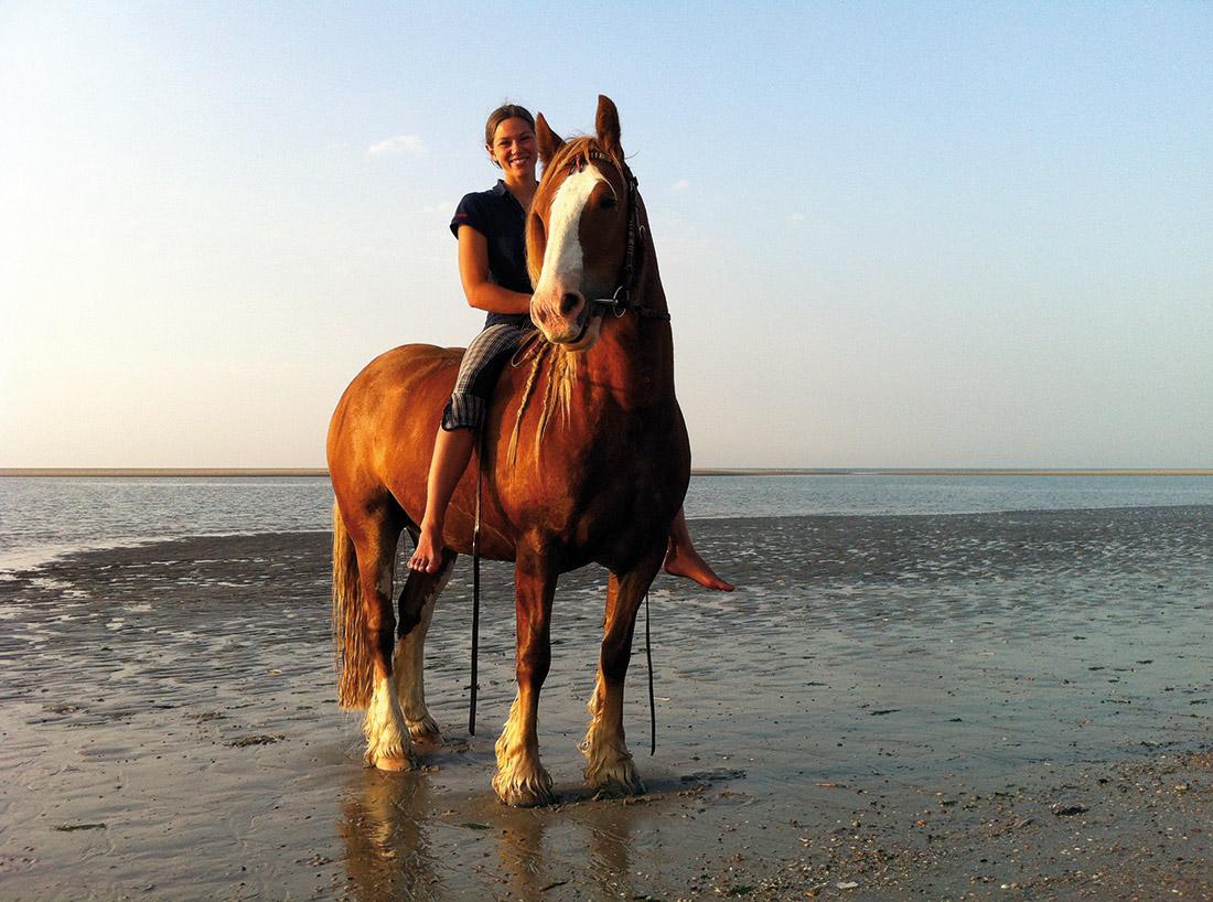 Die Insel Baltrum  Pferde