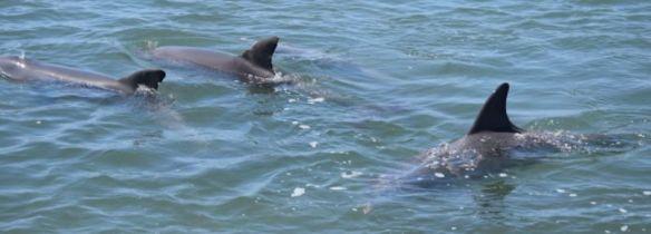 Dolphin eco-cruise, Bunbury