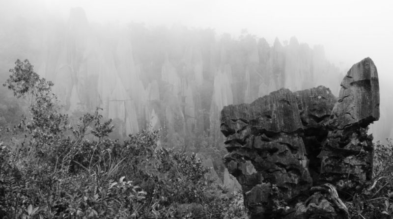 The Pinnacles, Mulu National Park, Sarawak, Malaysia @2015