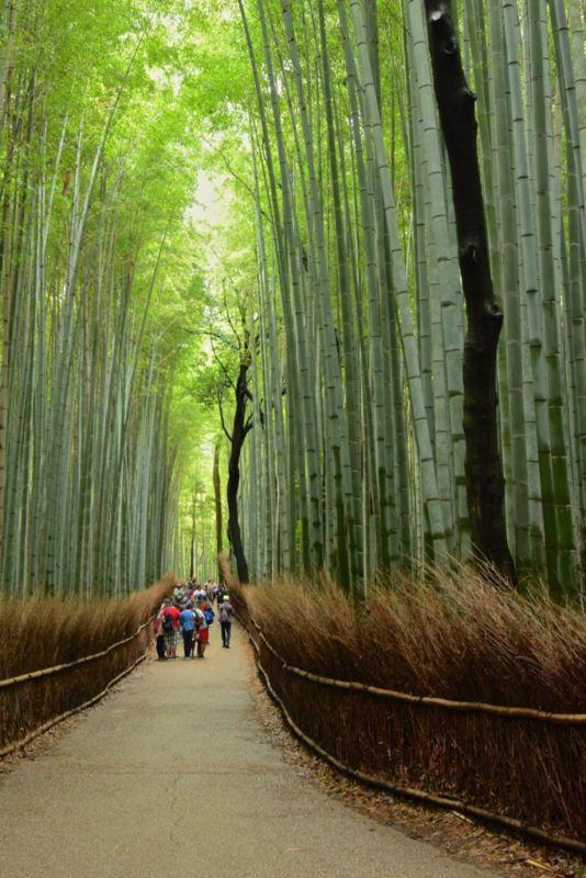 Bamboo Grove, Arashiyama, Kyoto