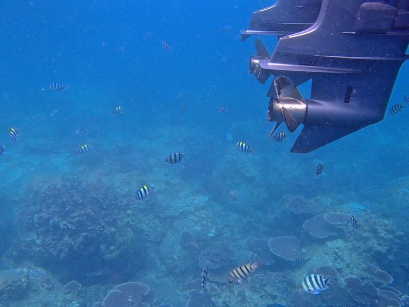 Underwater views while snorkelling, Tioman