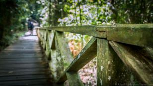 Wooden walkway leading to the Niah Caves.
