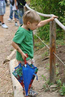 bambino allo zoo