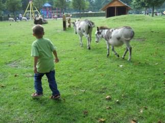 fattoria-per-bambini-al_med_hr