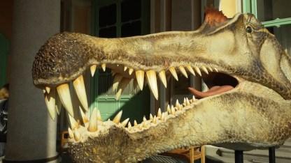 dinosauri--1010_103838