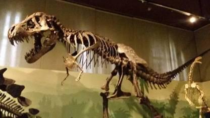 dinosauro top