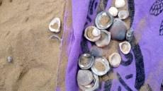 eco spiaggia brussa