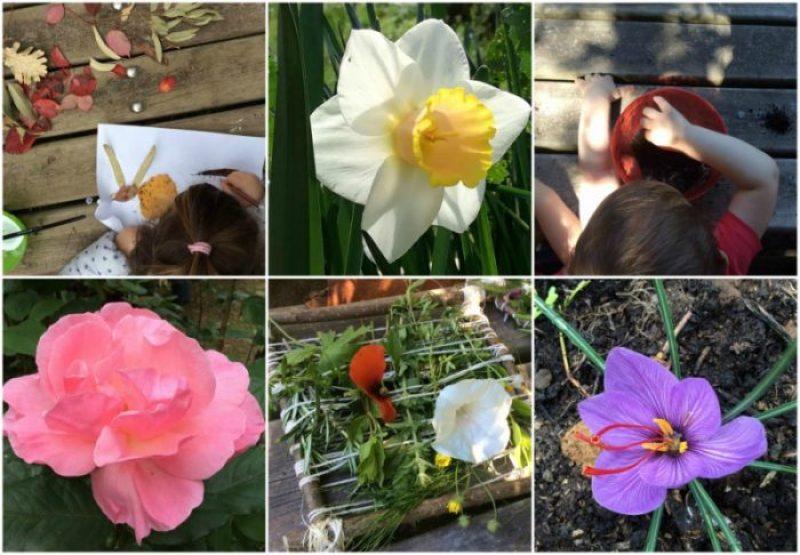 collage fiori e attività hortus urbis