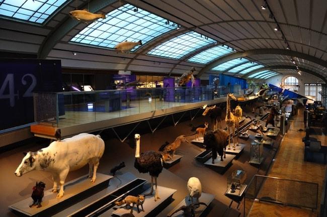 museo scienze naturali madrid