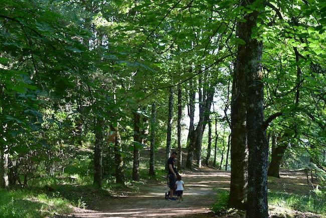 parco della fonte di San Gemini bosco