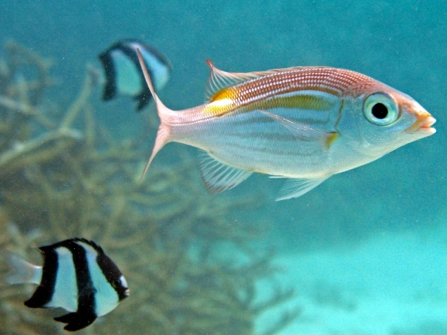 Aquaventure: osservare i pesci