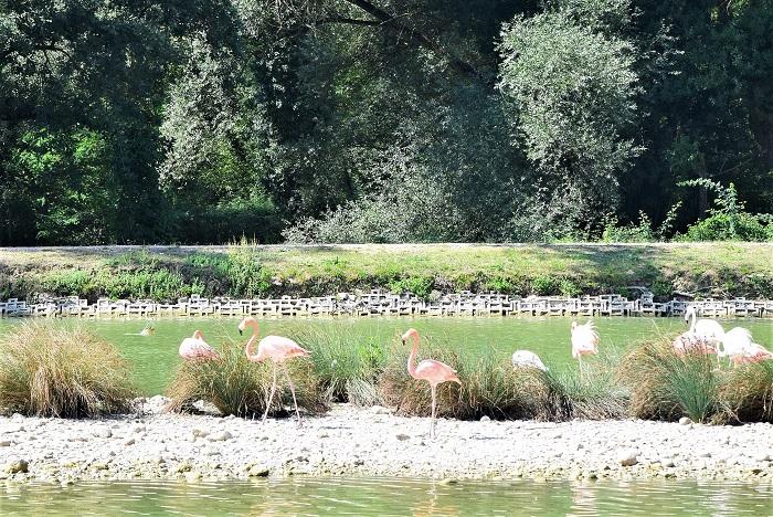 Leo Wild Park, i fenicotteri rosa