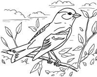 disegno cinghiale da colorare,disegno uccello da colorare.