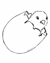 disegno uova con pulcino da colorare..pulcino della