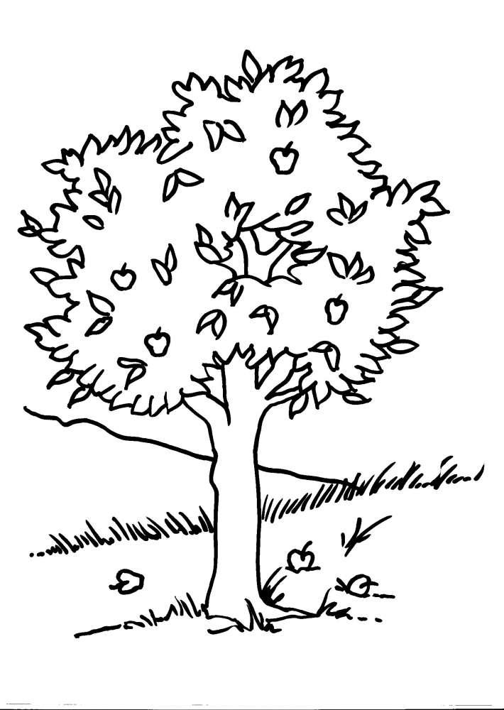 Disegno Albero Da Coloraredisegno Foglia Da Colorarepianta