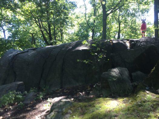 Signs of Fall Hunt Field Trip