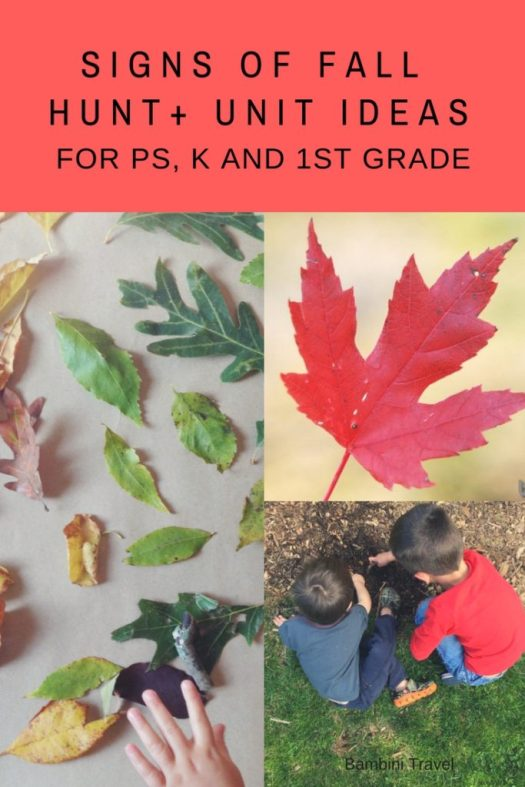 Signs of Fall Unit Field Trip Tips and Activity Ideas