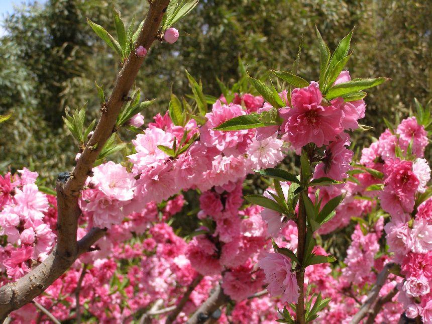 Frühling im Sommerpalast