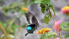 Schmetterling im Steinwald bei Kunming