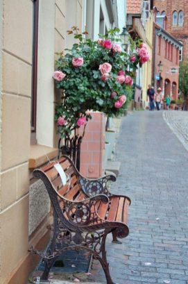 Eulenspiegelstadt Mölln Rosen
