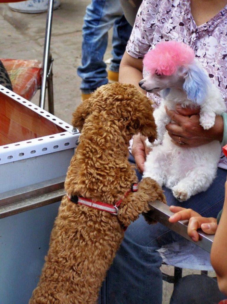 Hund in Kunming