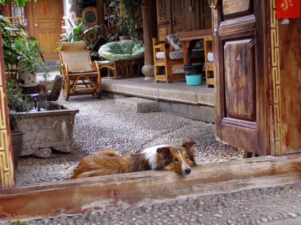 Hund in Lijiang