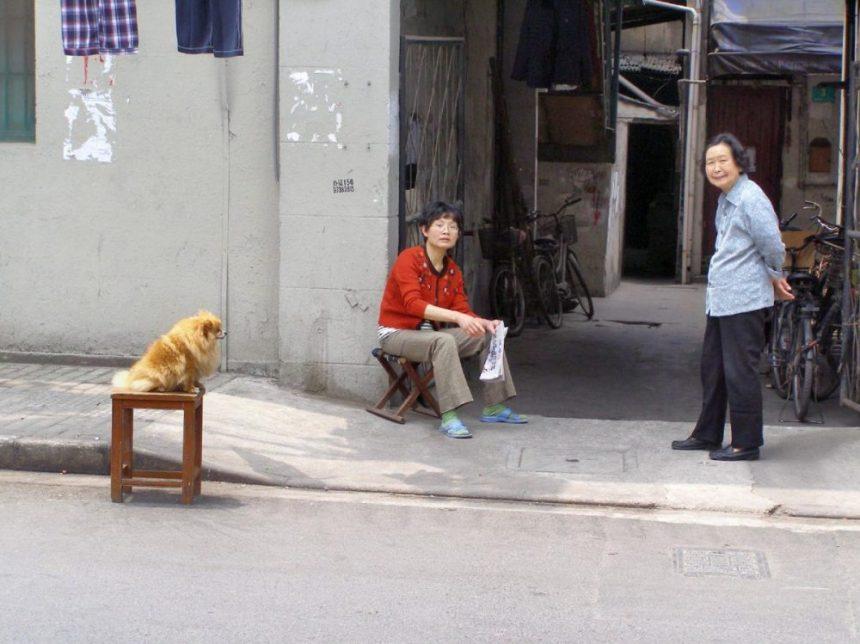 Hund in Shanghai
