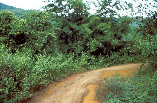 Jinghong Weg Xishuangbanna