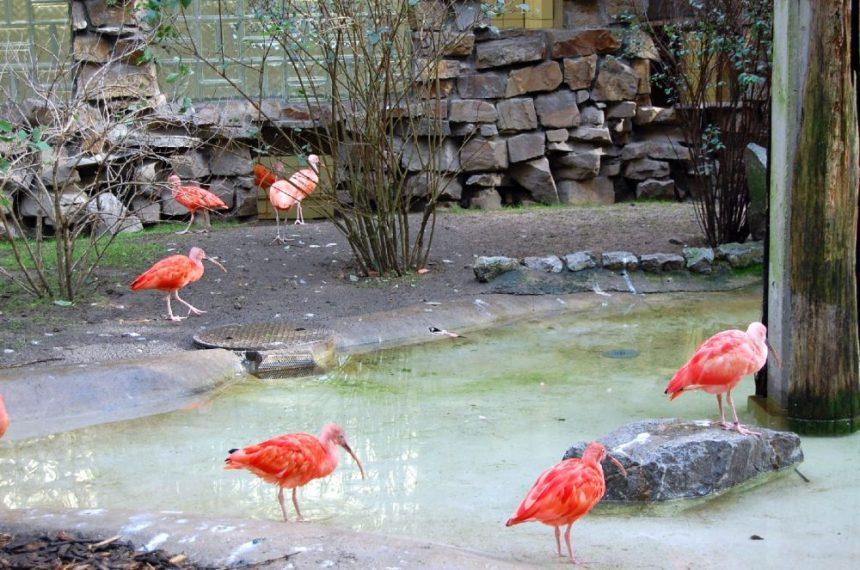 Vogelhaus im Duisburg Zoo