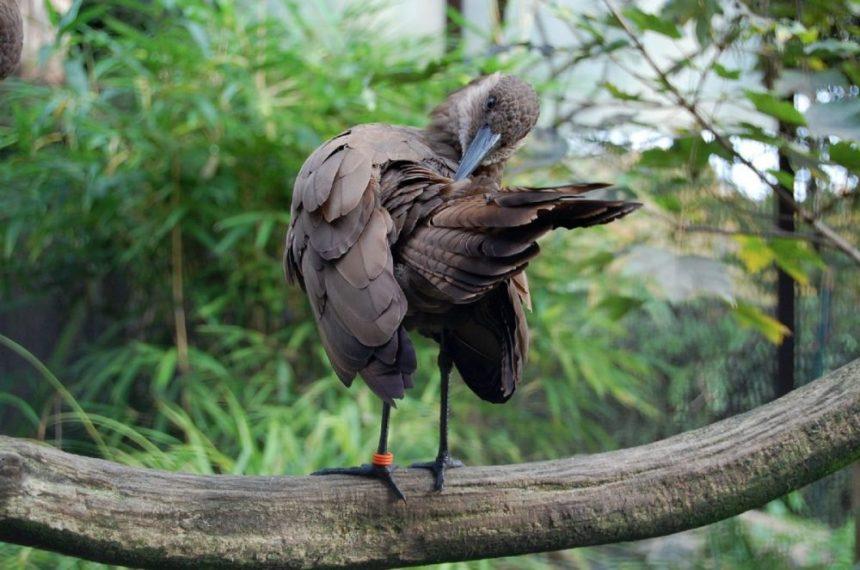 In der Vogelvoliere