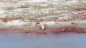 Chitwan Nationalpark 1992