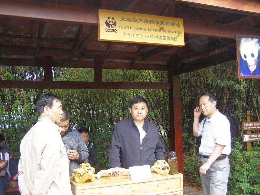 Chengdu Panda-Aufzuchtstation