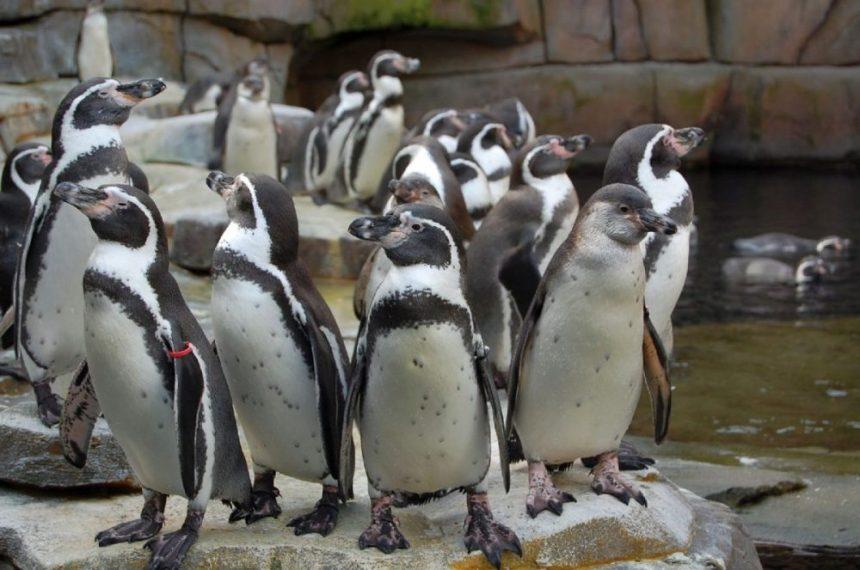 Îm Eismeer Tierpark Hagenbeck
