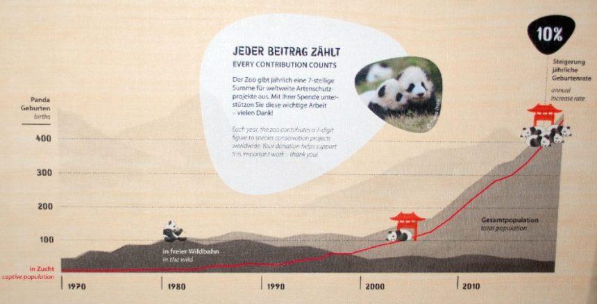 Geburtenrate der Großen Panda - Tafel