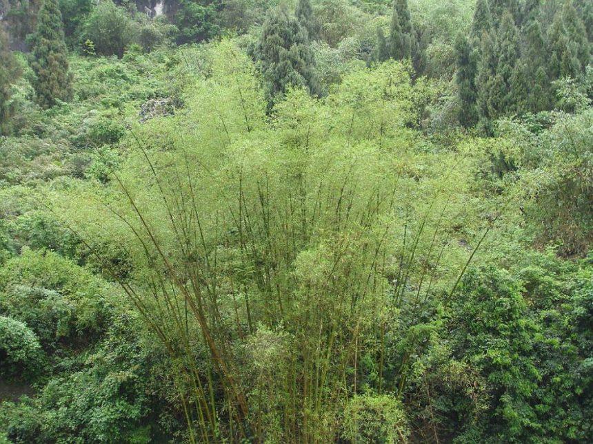 Bambus an einem Flussufer