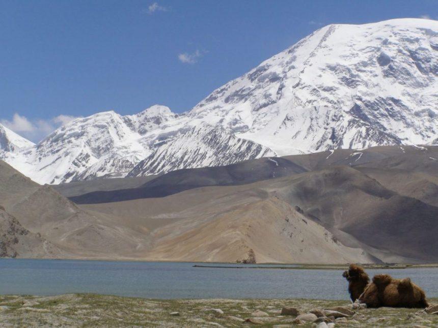 Kamel am Karakul See