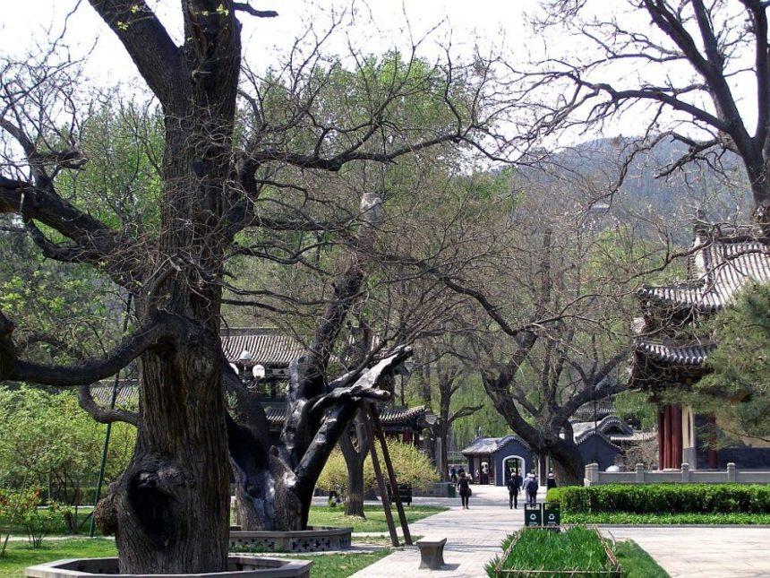 Alte Bäume in Jinci Ahnentempel