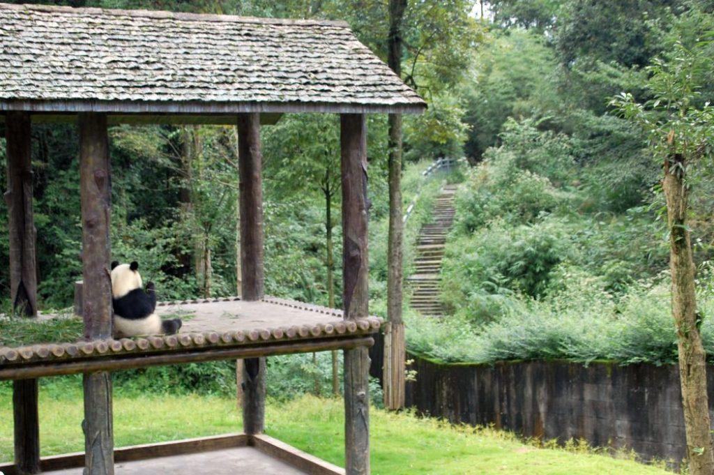 Bifengxia - üppige Natur und schöne Gehäge