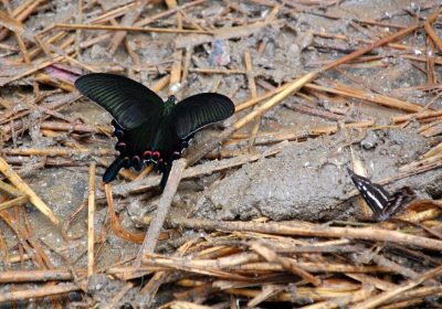 Schmetterline am Emeishan