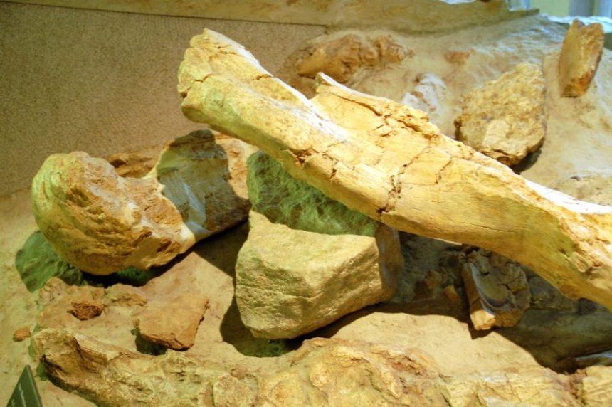 Museum für Vorgeschichte Halle Amboss mit Mammutknochen