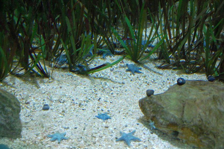 London Zoo: kleine blaue Seesterne