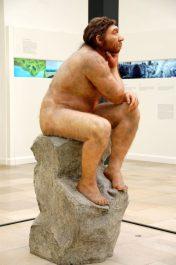 Museum für Vorgeschichte Halle Homo Erectus