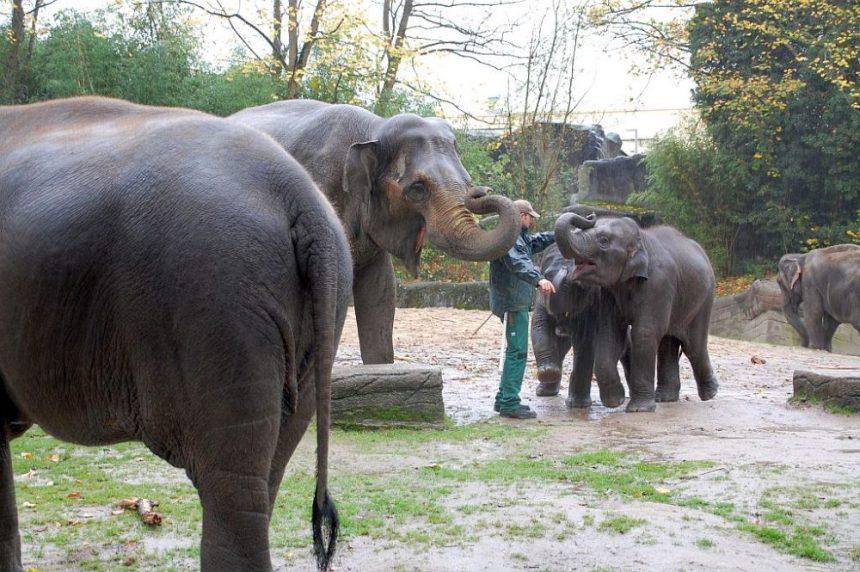 Tierpark Hagenbeck - Elefanten