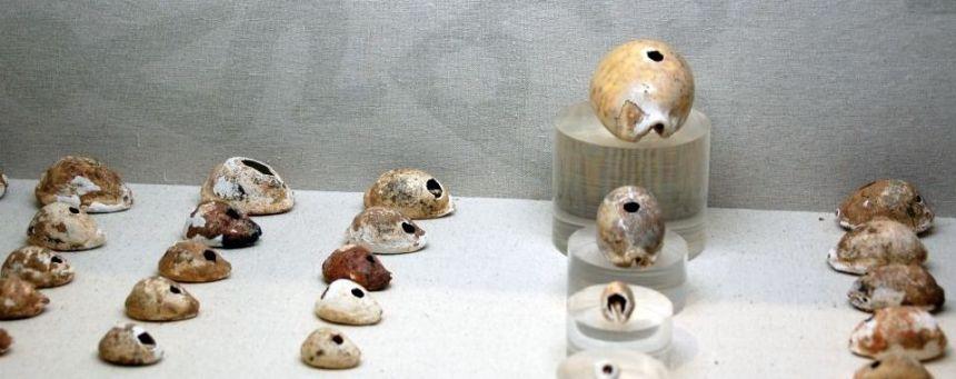 Kauri Muscheln gefunden in Yinxu.