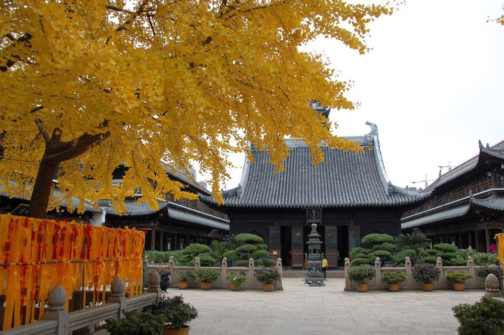 Zhenru Tempel Shanghai,besonders schön im Herbst, wenn der Gingko blüht.
