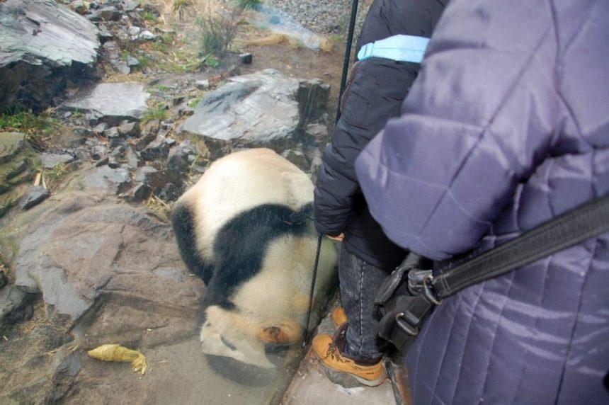Der Panda und das Kind