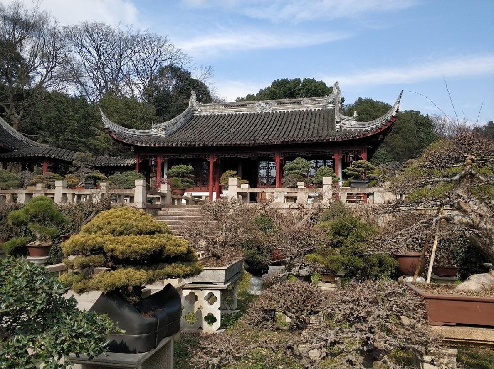 Tiger Hill Bonsai