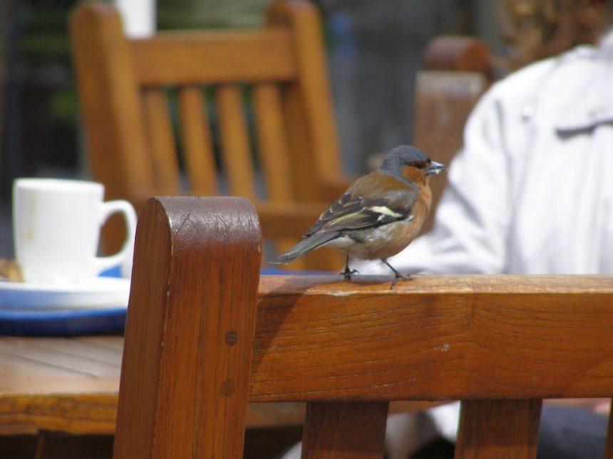 Muckross House Cafe