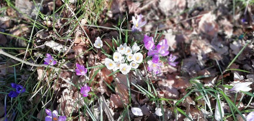 Frühling in Breklum