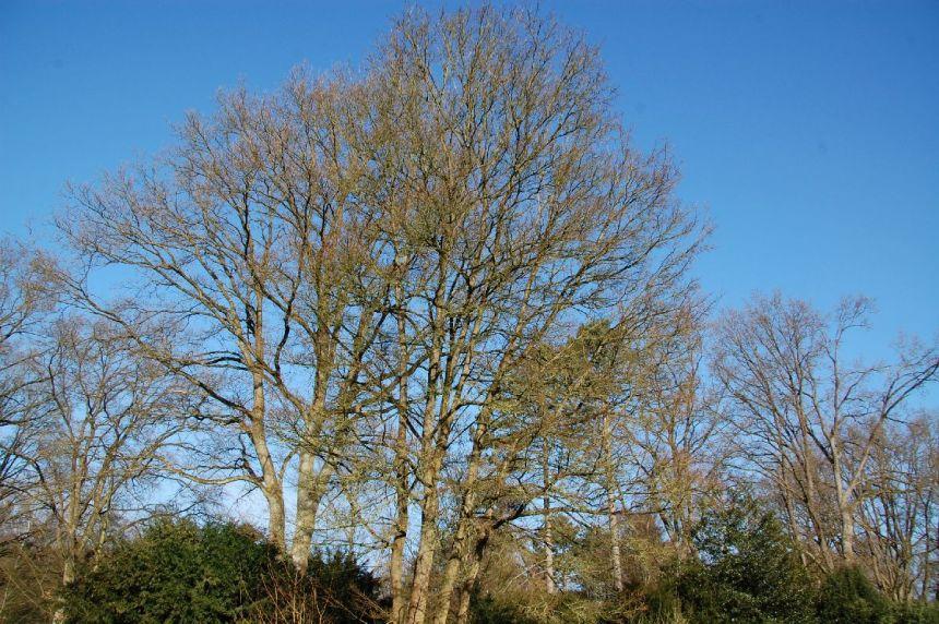 Bäume vor strahlendblauem Himmel.